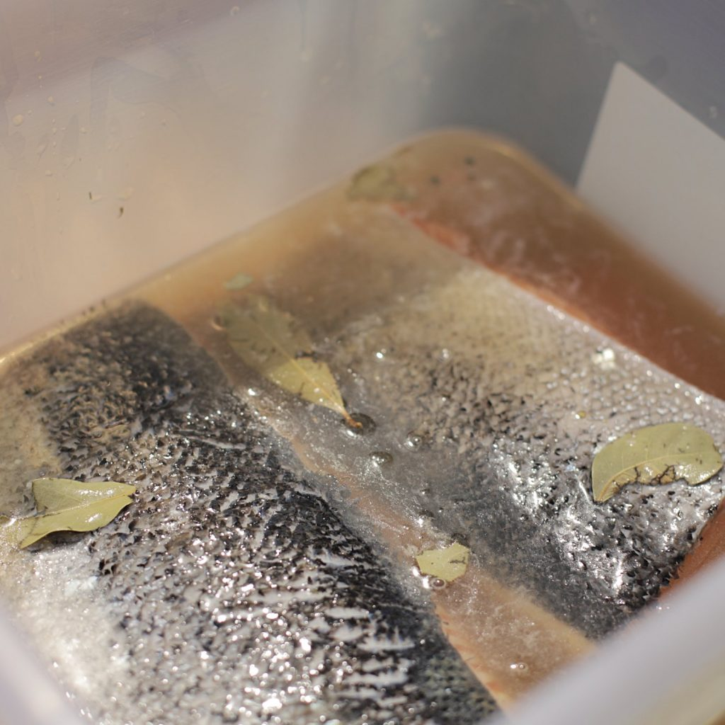 Salmon soaking in brine